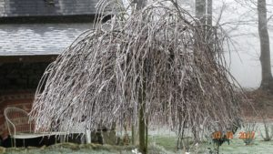 L'arbre bien coiffé de la Maison Launay